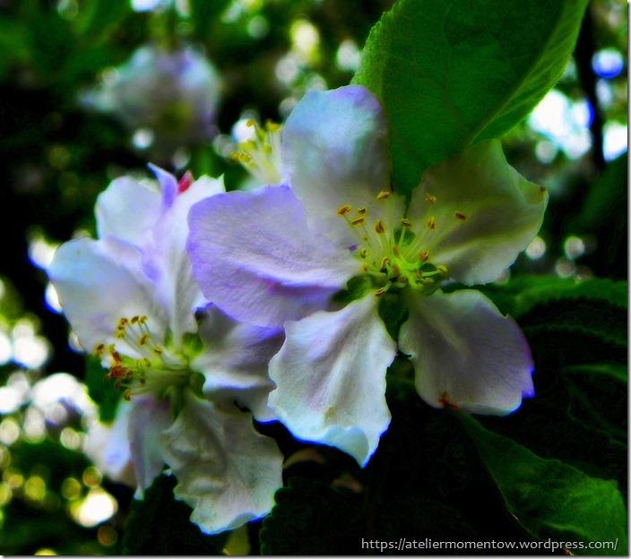 kwiatek1