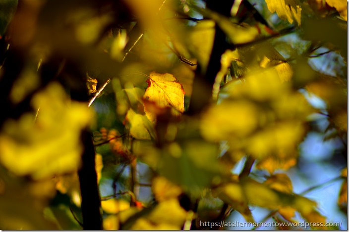 jesień3