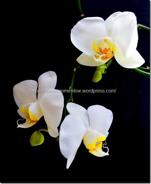 kwiat